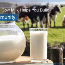 Proven Ways Cow Milk Helps You Build Strong Immunity